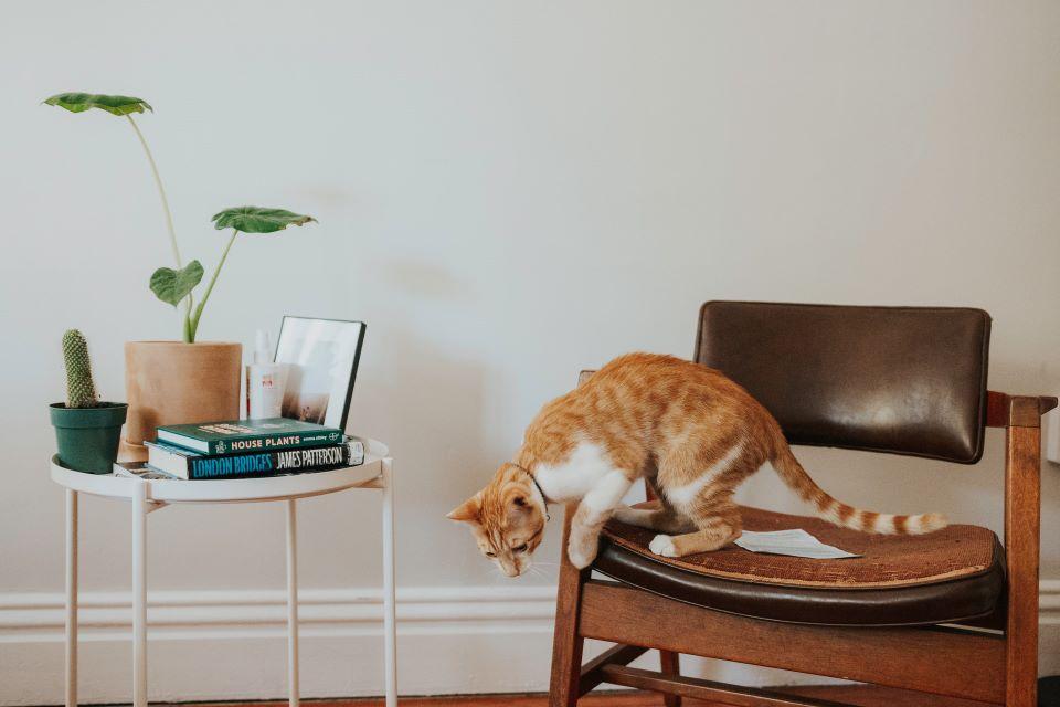 Lampy sufitowe do salonu - nowoczesne czy klasyczne? Sprawdzamy trendy!